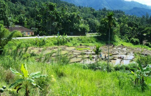 2006_SriLanka_Bild6