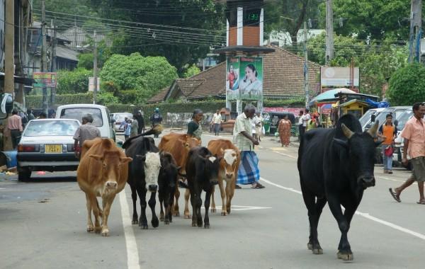 2010_SriLanka_Bild8
